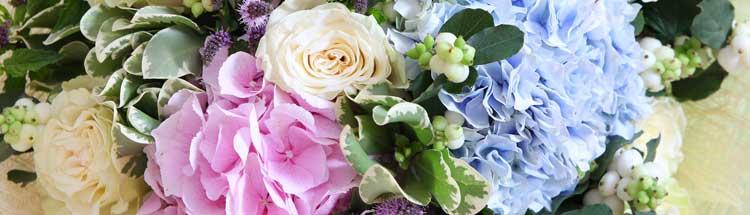 Flores para cada signo del zodiaco